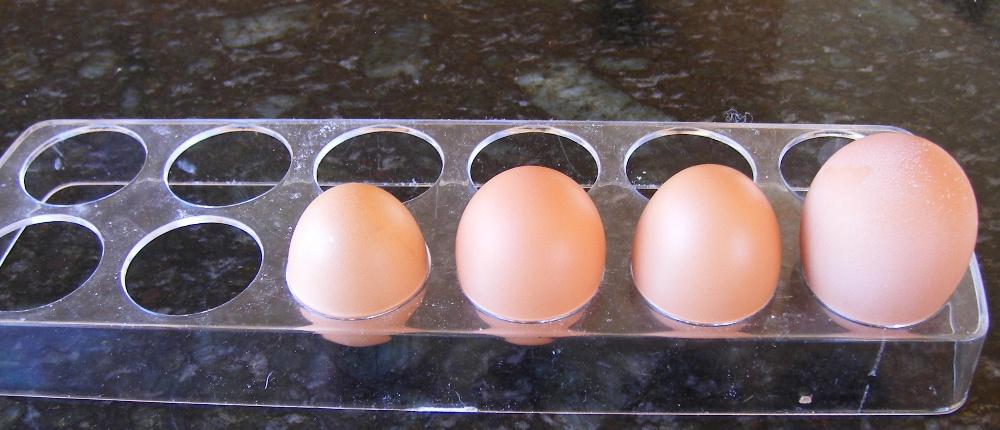 Nancy pullet's eggs