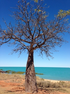 Boab Tree Town Beach Broome
