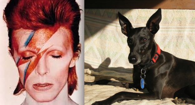 Ziggy and Ziggy