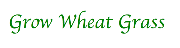Grow Wheat Grass